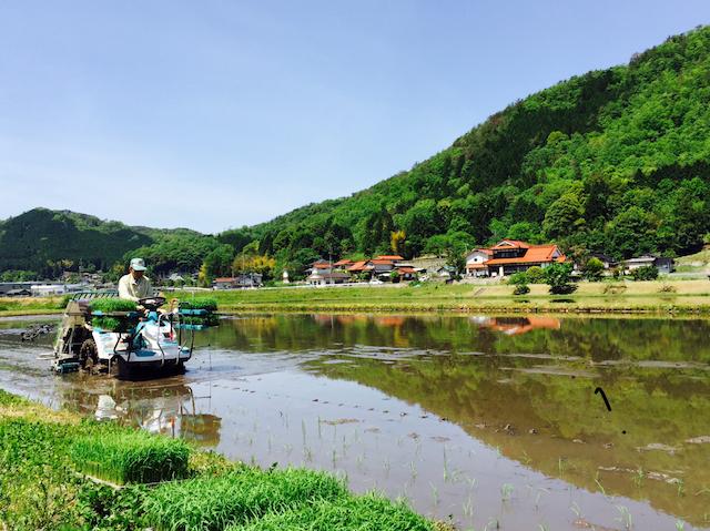 GWは安芸高田市向原町の実家に帰って田植え。今年もお米をつくります