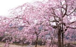 新元号は『令和(れいわ)』。日本の古典である万葉集から選ばれた美しい言葉。さぁ5月1日から令和の時代が始まります!